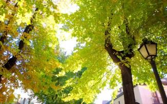 Autumn in Aranjuez
